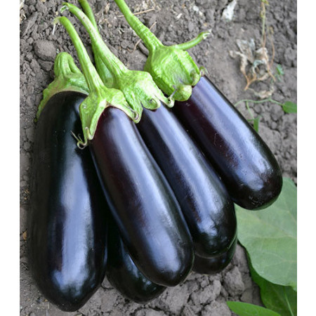 Нарвал F1 (Narval F1) — семена баклажанов, LARK SEEDS