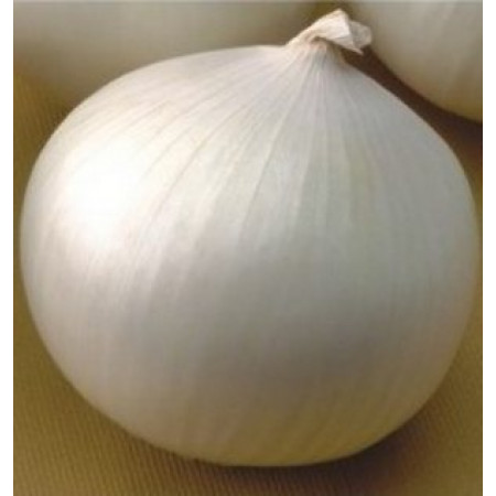 Сьерра Бланка F1 (Sierra Blanca F1) — семена лука, SEMINIS