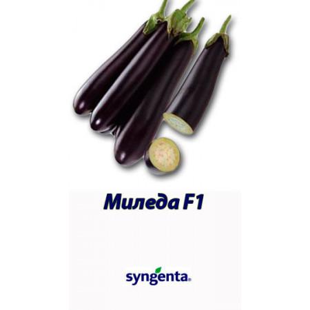 Миледа F1 (Mileda F1) — семена баклажанов, SYNGENTA