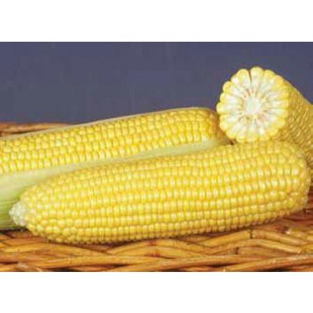 ГСС  8529 F1 (GSS 8529 F1) — семена кукурузы, SYNGENTA