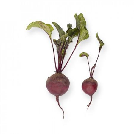 БЕБИБИТ (BABYBEAT) - семена свеклы, Rijk Zwaan (Beet/Свекла)