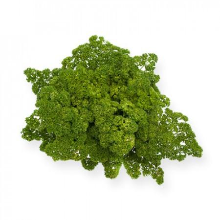 МООСКРАУЗЕ (MOOSKRAUSE) - семена петрушки кудрявой, Rijk Zwaan (GreenCultures/ЗеленныеКультуры)