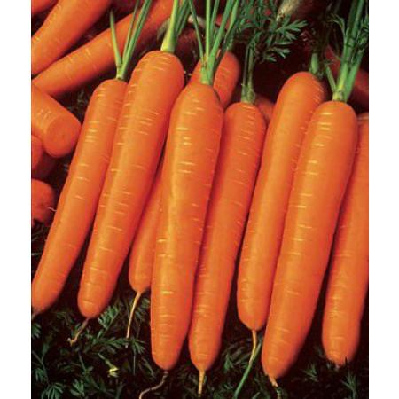 Карболли F1 (Carbolli F1) — семена моркови, SEMINIS
