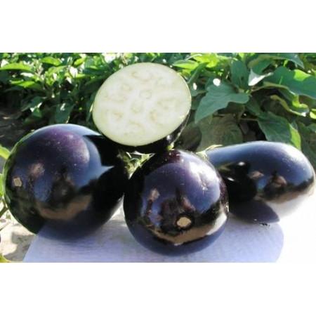Клоринда F1 (Clorinda F1) — семена баклажанов, SEMINIS