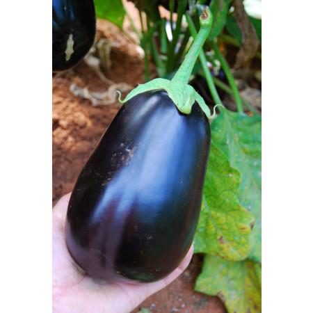 ШЕРИЛ F1 (CHERYL F1) - семена баклажана, Rijk Zwaan
