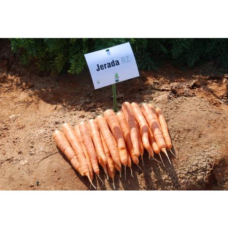 Cемена моркови ДЖЕРАДА F1 Rijk Zwaan