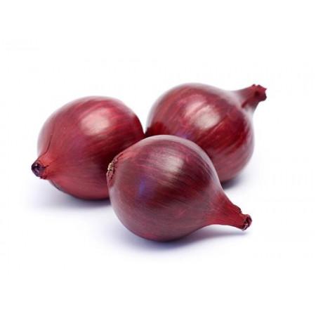 СВ 4593 F1 (SV 4593 F1) — семена лука, SEMINIS