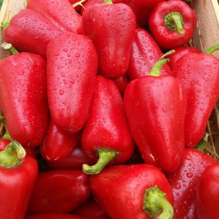 Любовь F1 (Lubov F1) — семена перца, SYNGENTA