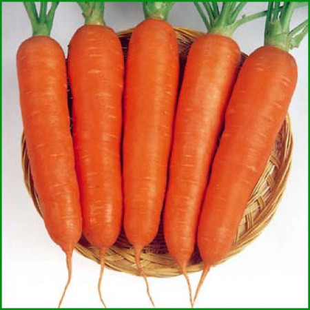Виктория F1 (Victoria F1) — семена моркови, SEMINIS