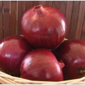 Грэйтфул Ред F1 (Grateful Red F1) — семена лука, SEMINIS