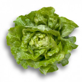 ДЖИСКА (JISKA) - семена салата, Rijk Zwaan