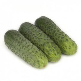 КАРАОКЕ F1 (KARAOKE F1) - семена огурца партенокарпического, Rijk Zwaan
