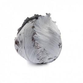 РЕКСОМА F1 (REXOMA F1) - семена капусты краснокочанной, Rijk Zwaan