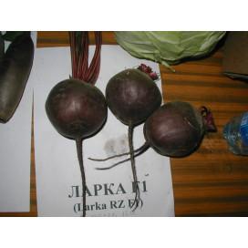 ЛАРКА (LARKA) - семена свеклы, Rijk Zwaan