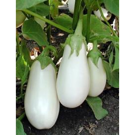 Бибо F1 (Bibo F1) — семена баклажанов, SEMINIS