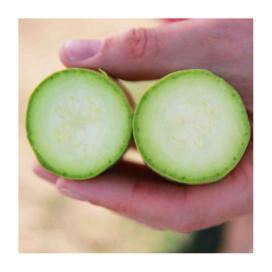 Аделия F1 (ADELIA F1) — семена кабачков, ENZA ZADEN