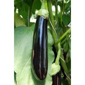 ЭСТЕЛЬ F1 (ESTELLE F1) - семена баклажана, Rijk Zwaan