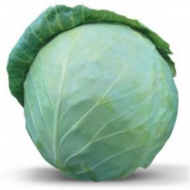 Вестри F1 (Vestri F1) — семена капусты, SEMINIS