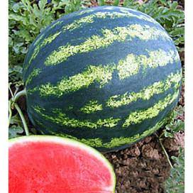 КРИМСОН СВИТ F1( KRIMSON SWEET F1)  — семена арбуза, Lark Seeds