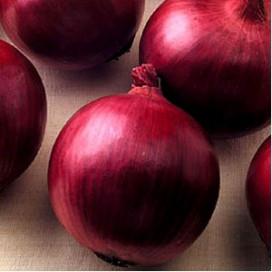 Рэд Цеппелин F1 (Red Zeppelin F1) — семена лука, SEMINIS