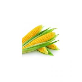 Тести Дрим F1 — семена кукурузы, Agri Saaten