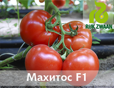 Махитос 73-407 F1